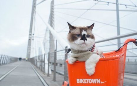 cat on bike