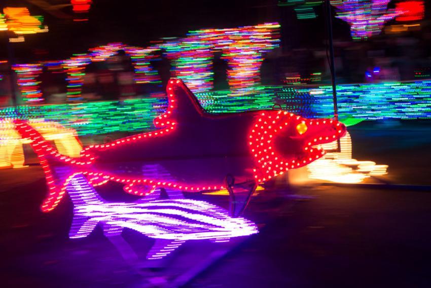 Zoo lights