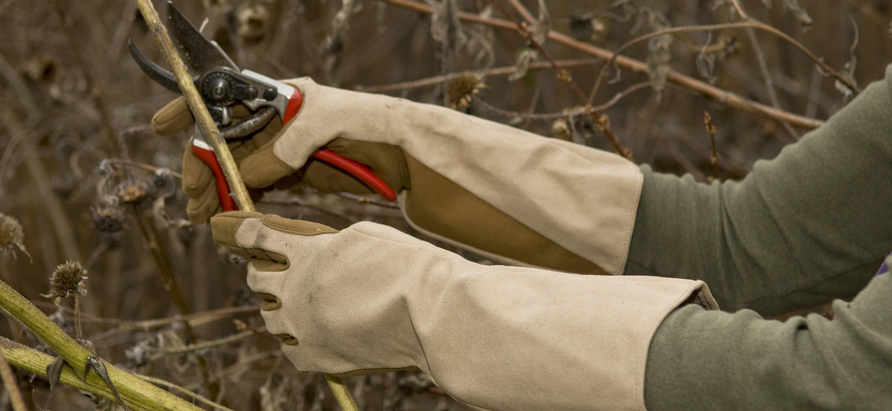 Pruning gloves