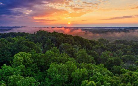 Amazon jungle and smoke