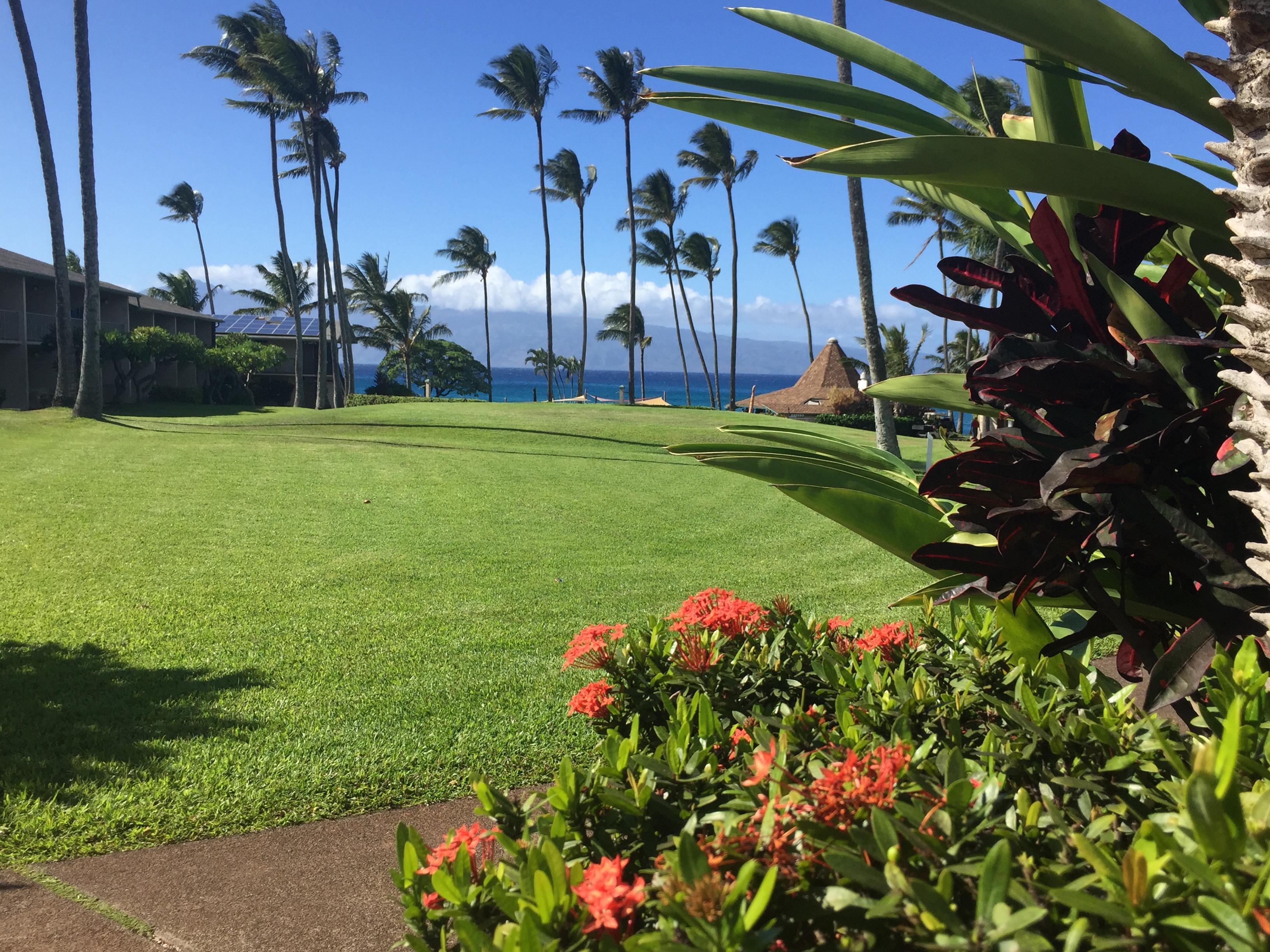 Resort landscaping