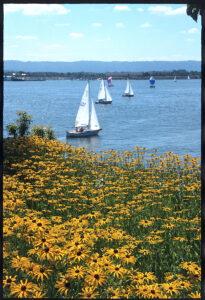 sailboats on water
