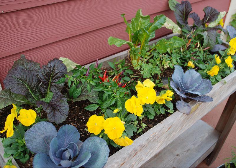 Flowers in elevated garden