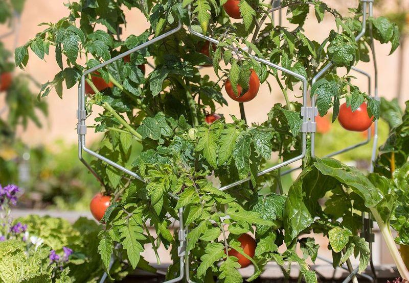 Tomato stake