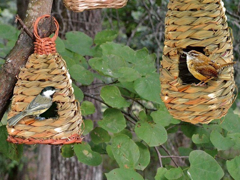 Birds in roosting pockets