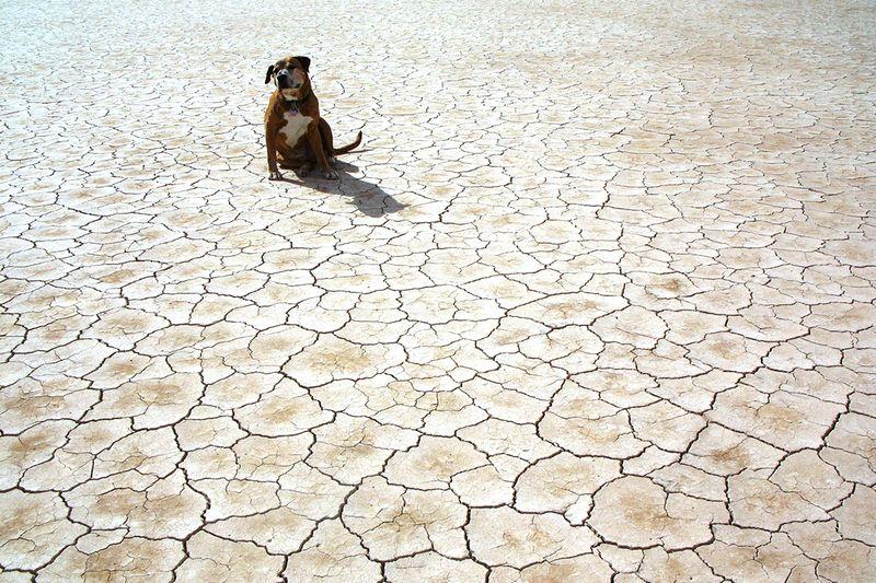 dog on drought stricken land